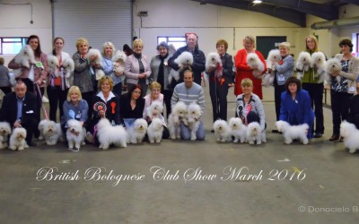 British Bolognese Club show March 2016