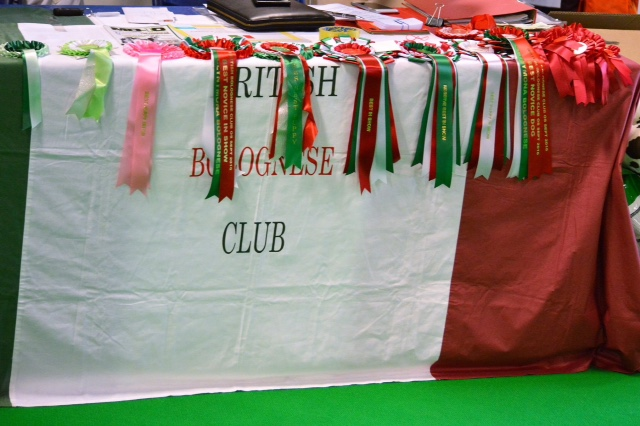 British Bolognese Club Show 31st August 2018